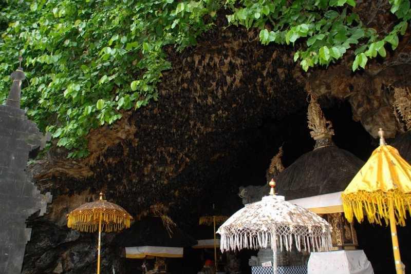 Бали пещера летучих мышей