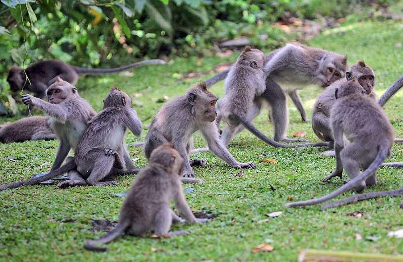 Денпасар обезьяний лес