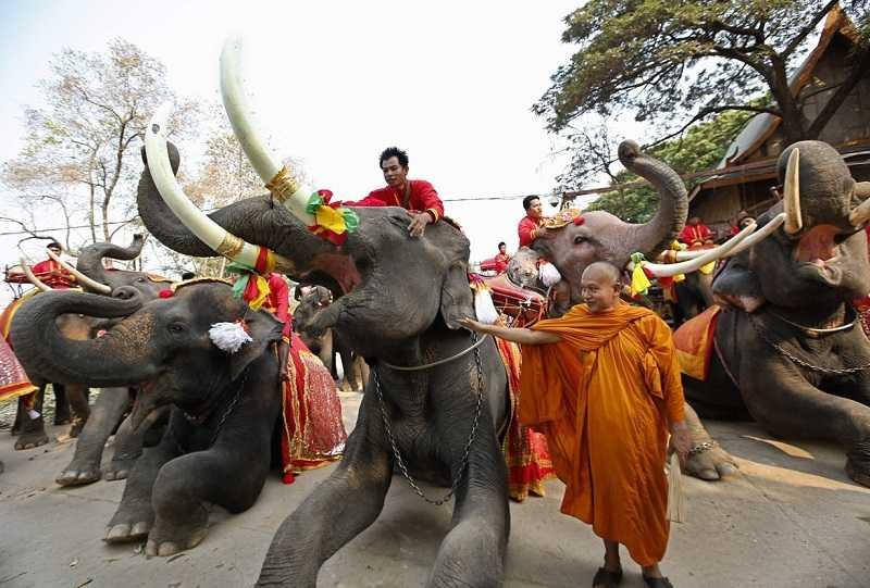 День слона1