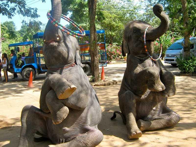 Деревня слонов1