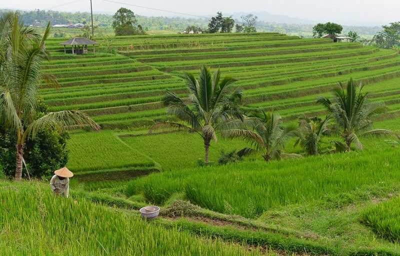 Индонезия Субак