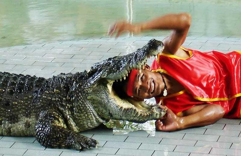 Крокодиловая ферма1