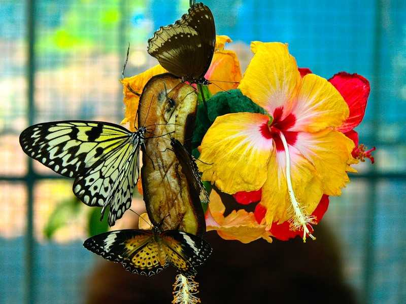 Сад бабочек пхукет