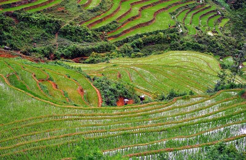 Сапа рисовые поля террасы
