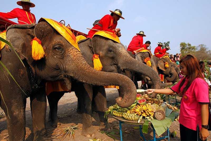 Фестиваль слонов