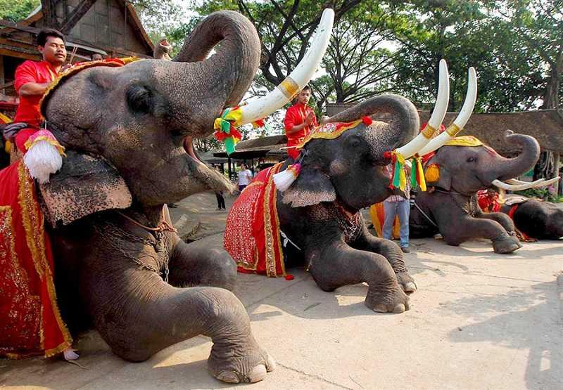Фестиваль слонов1