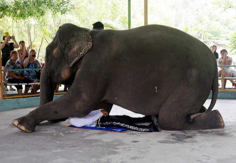 Цирк слонов