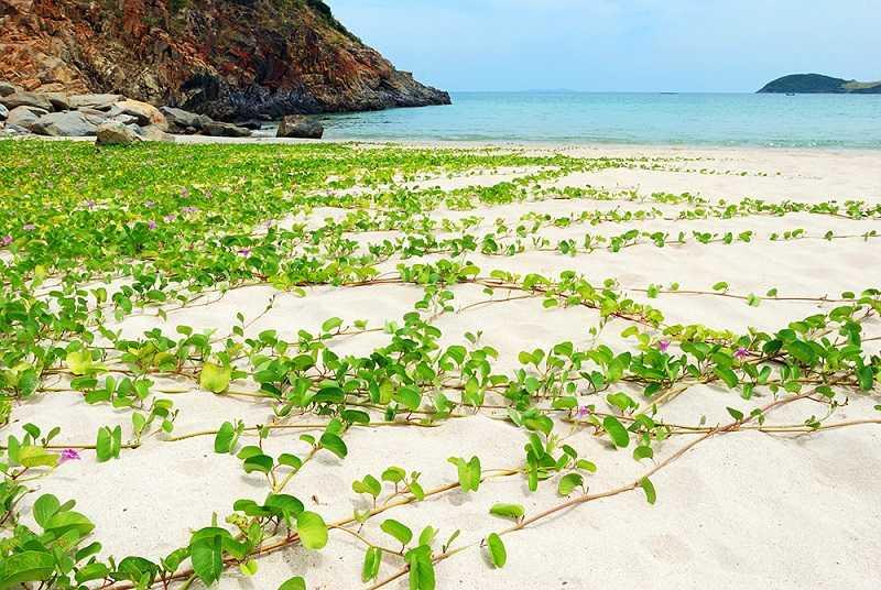 Шелковичный пляж