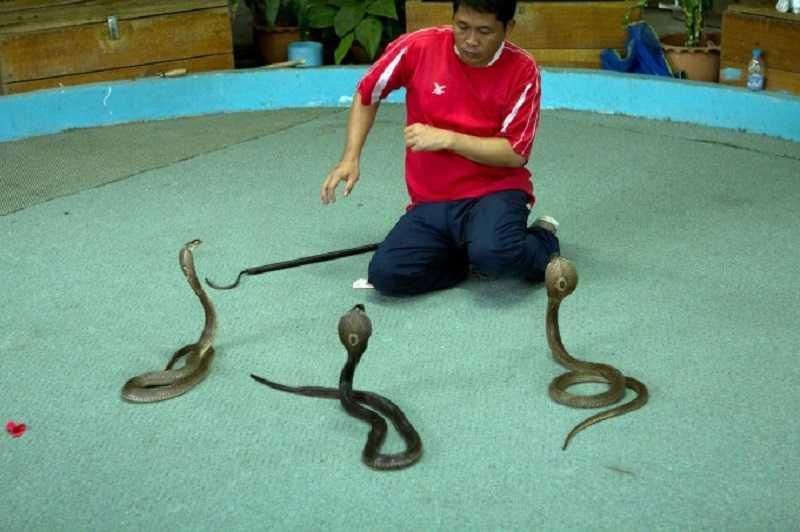 змеиная ферма1
