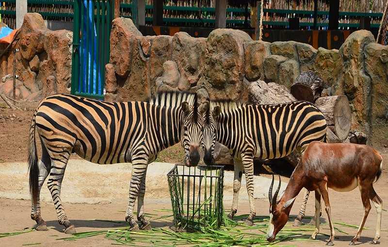 зоопарк в Хошимине,что посмотреть с детьми