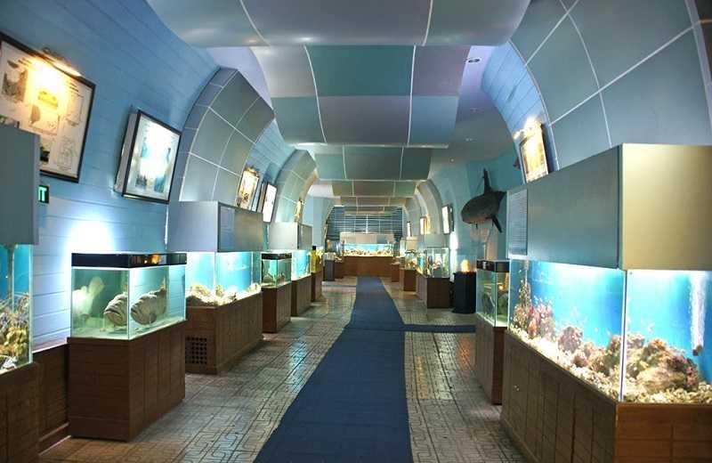 музей при Институте Океанографии