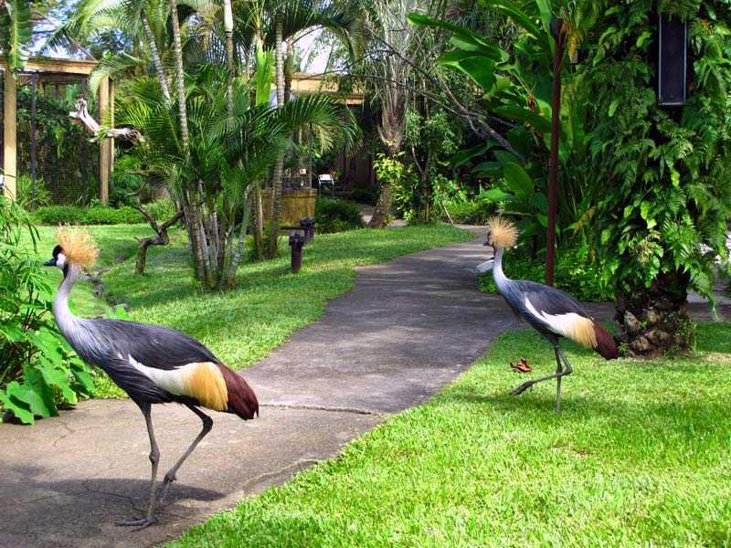 острова Гили Парк птиц