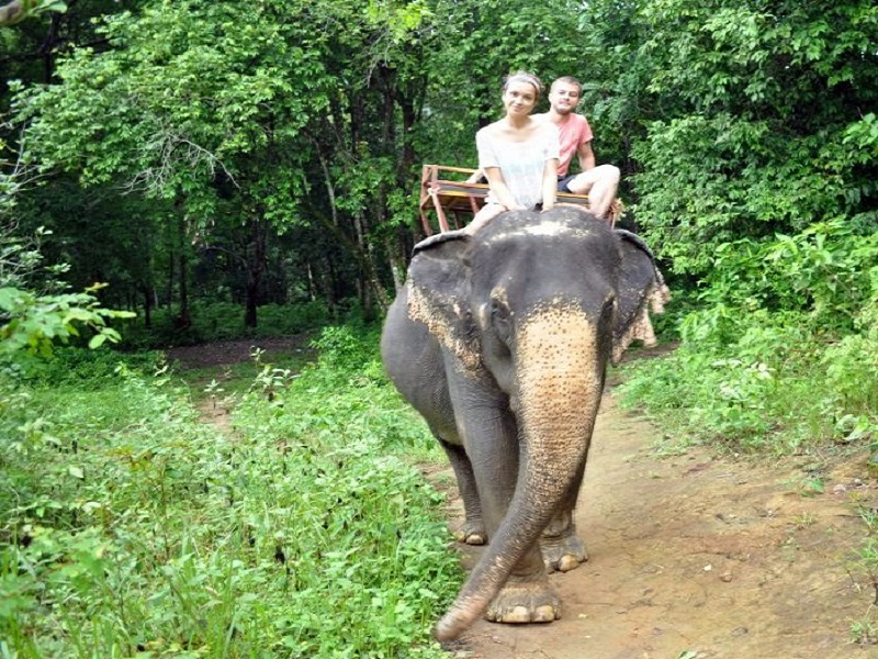 экскурсия на слоне