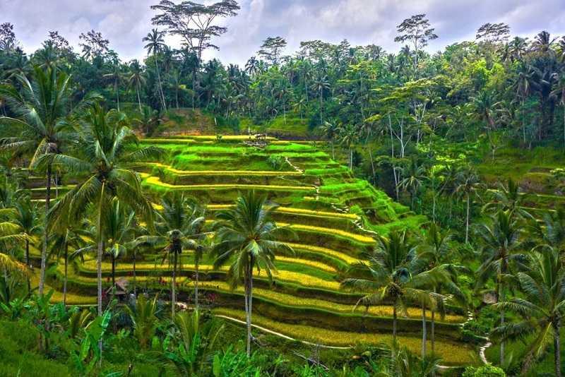 Бали Рисовые террасы Тегалланг
