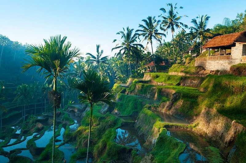 Бали город Убуд