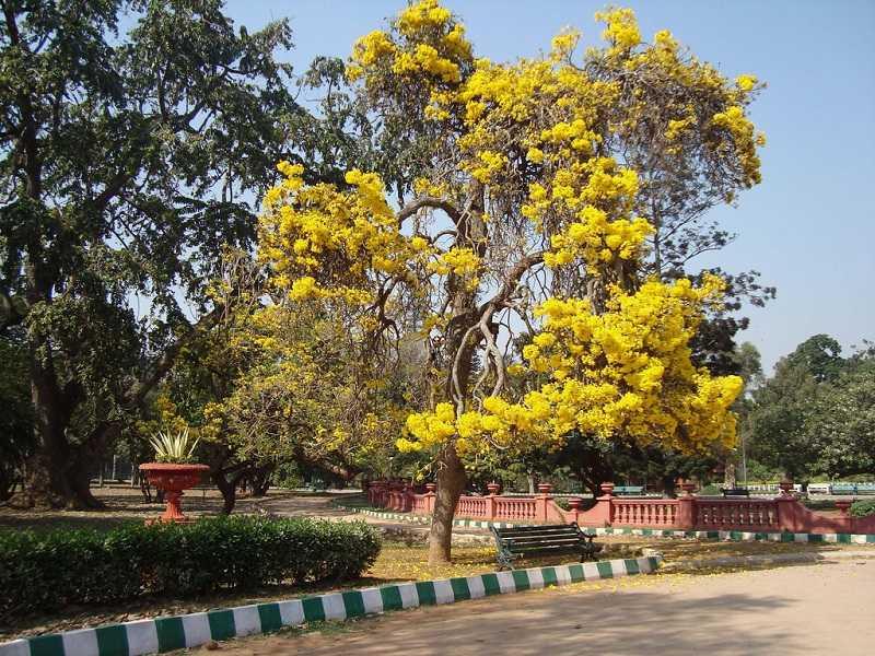 Бангалор Ботанический сад Лалбагх