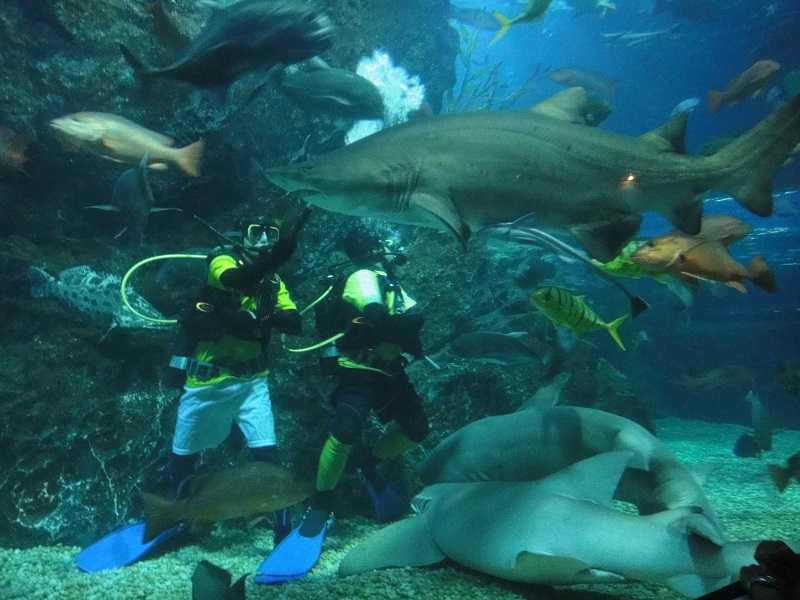 Бангкок океанариум Siam Ocean World плавание с акулами