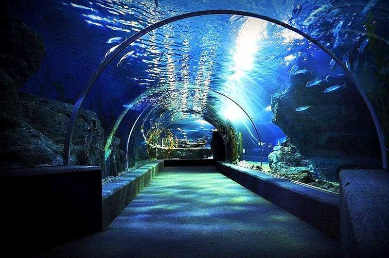 Бангкок океанариум Siam Ocean World1