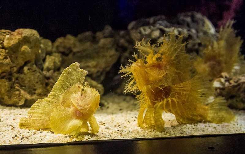 bangkok-okeanarium-siam-ocean-world2