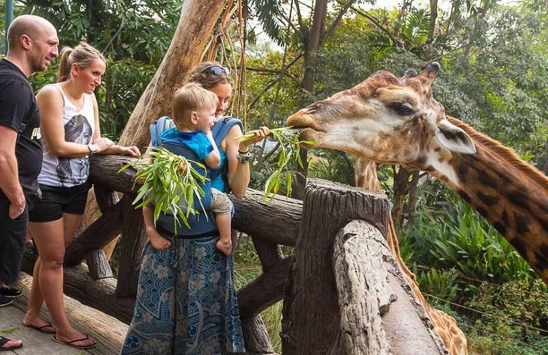 Бангкок зоопарк Дусит