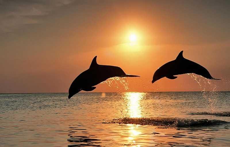 Бенаулим дельфины