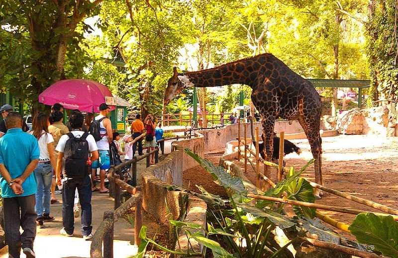 Чиангмай зоопарк