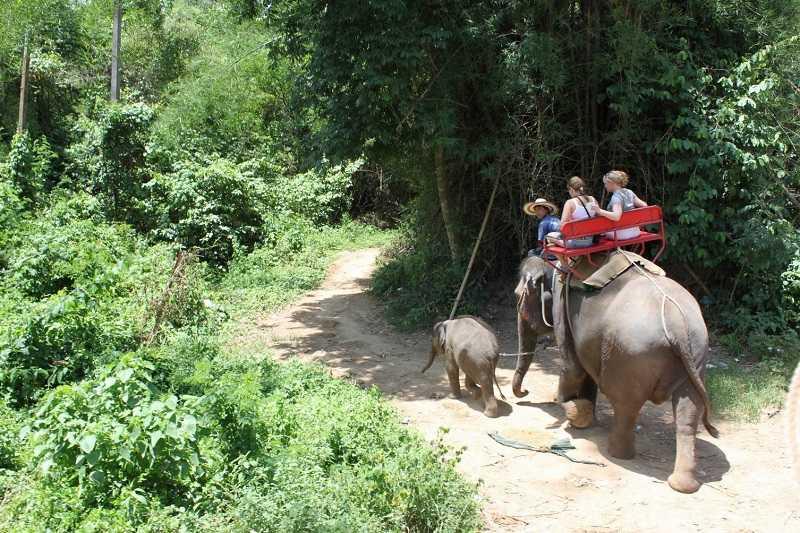 Деревня слонов Паттайя что входит в стоимость
