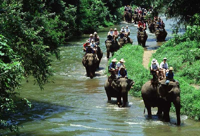 Деревня слонов Паттайя купание со слонами