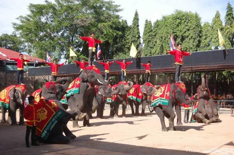 Деревня слонов Паттайя щоу со слонами