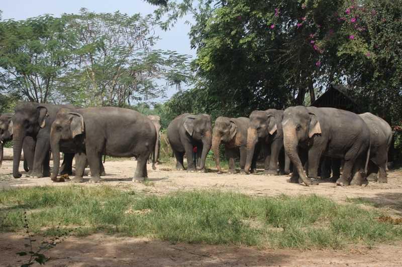Деревня слонов Паттайя жители