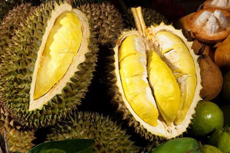 Durian-v-Taylande
