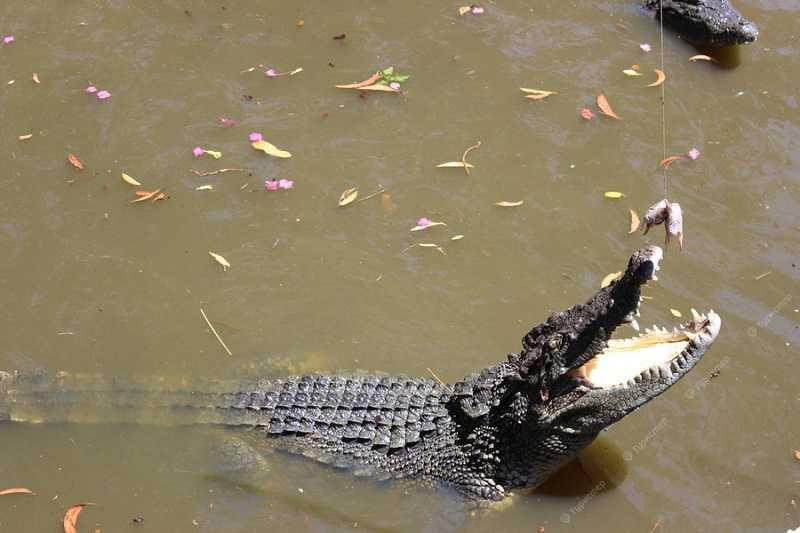 Фантьет термальные источники Бинь Чау крокодилы