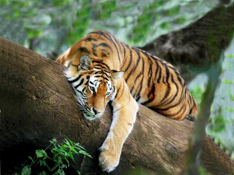Гоа тигровый заповедник
