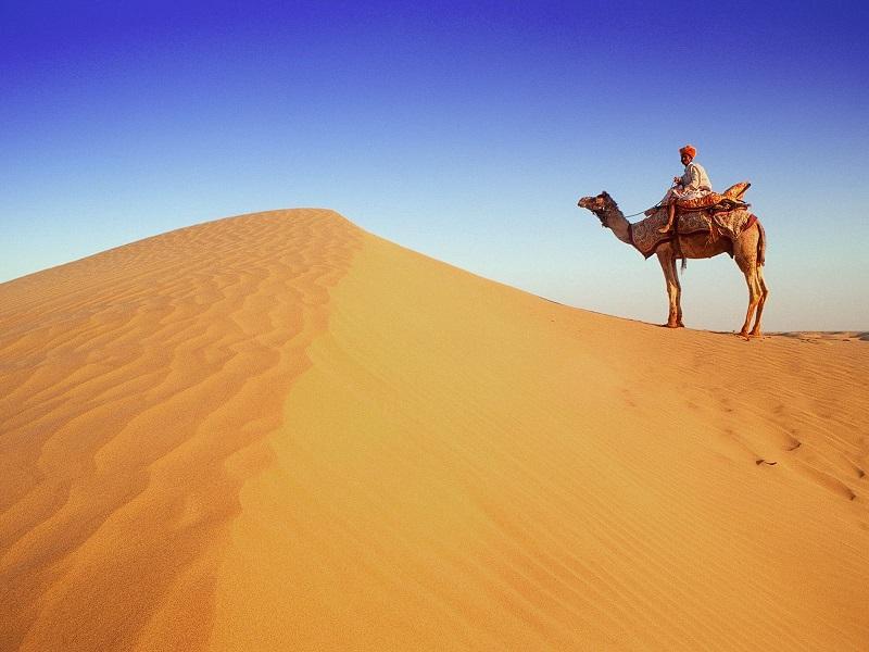 Индия катание на верблюдах