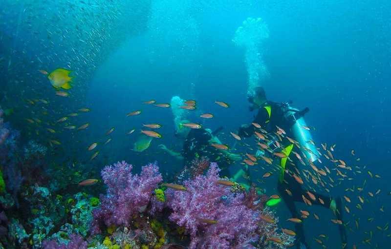 Коралловый остров.Пхукет дайвинг