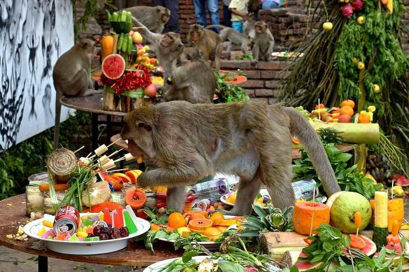 Лопбури фестиваль Monkey Buffet Festival