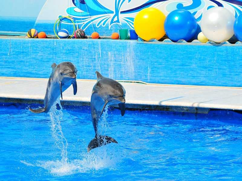 Наклуа дельфинарий