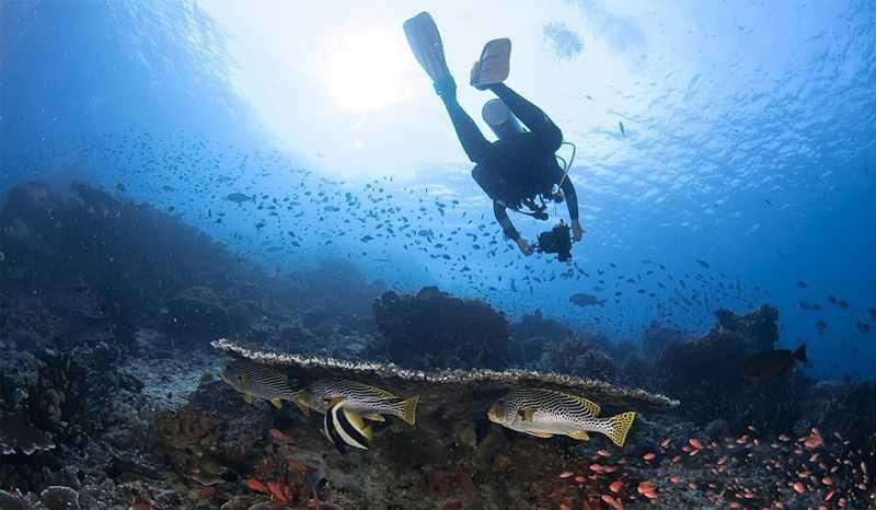 Национальный парк Уджунг Кулон остров Панайтан дайвинг