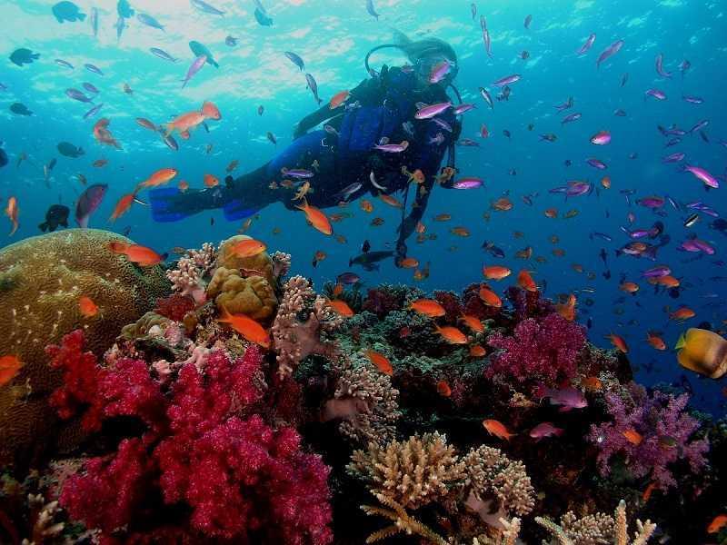 Нячанг остров Хон Мун дайвинг коралловый сад
