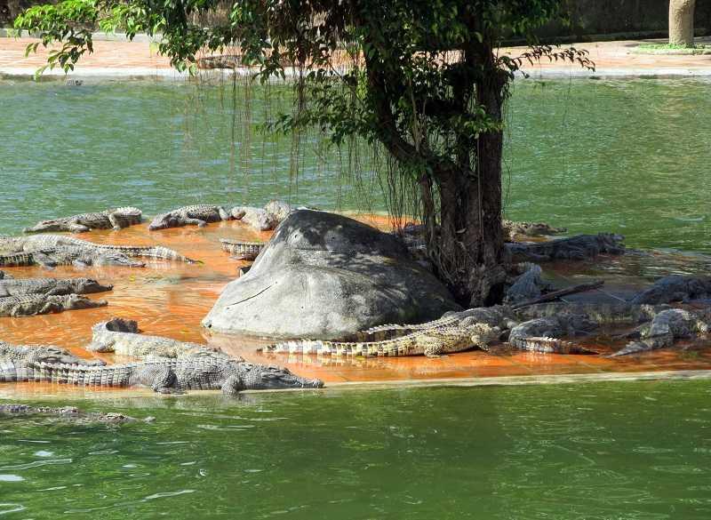 Нячанг водопад Янг Бей кормление крокодилов