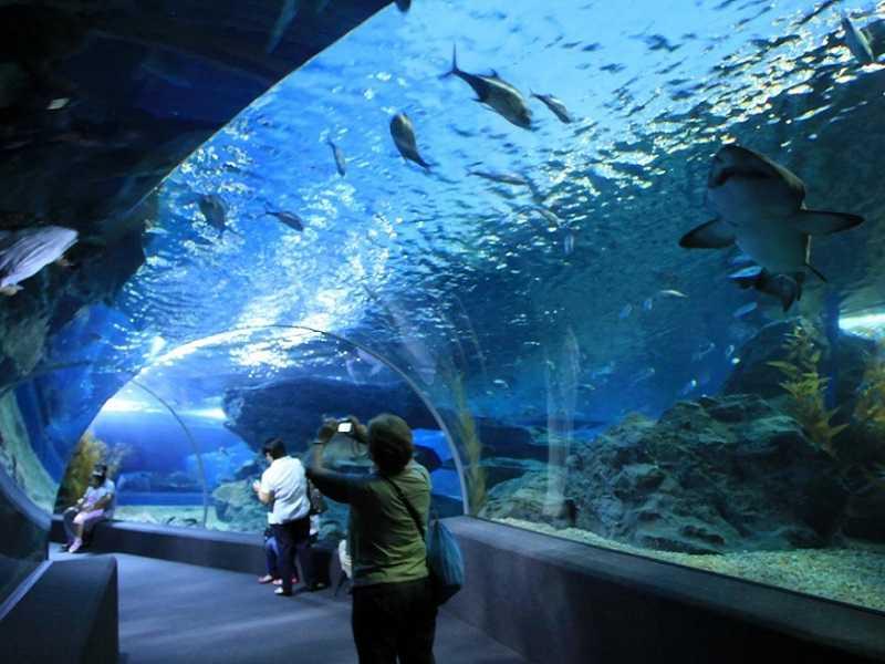 Океанариум в Паттайе 2003 год