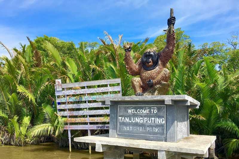 Остров Борнео Национальный парк Tanjung Puting