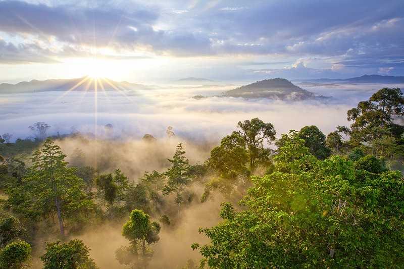 Остров Борнео горные дождевые леса