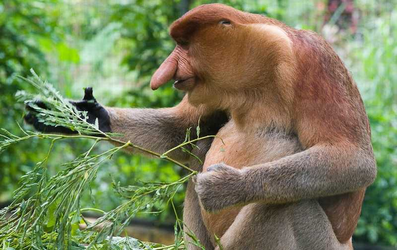 Остров Борнео животные