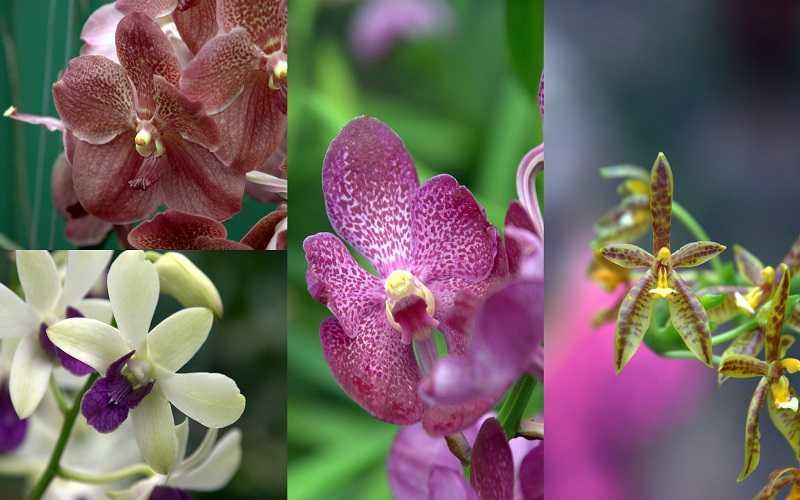 Остров Ко Ланта ферма орхидей