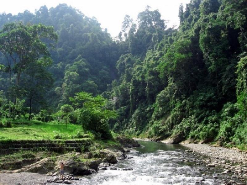 Остров Суматра парк Гунунг-Лесер