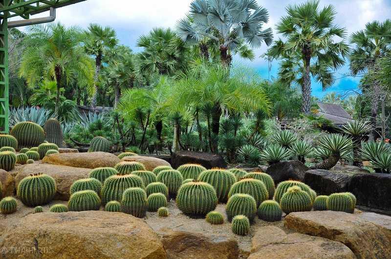 Парк Нонг Нуч в Паттайе Сад кактусов