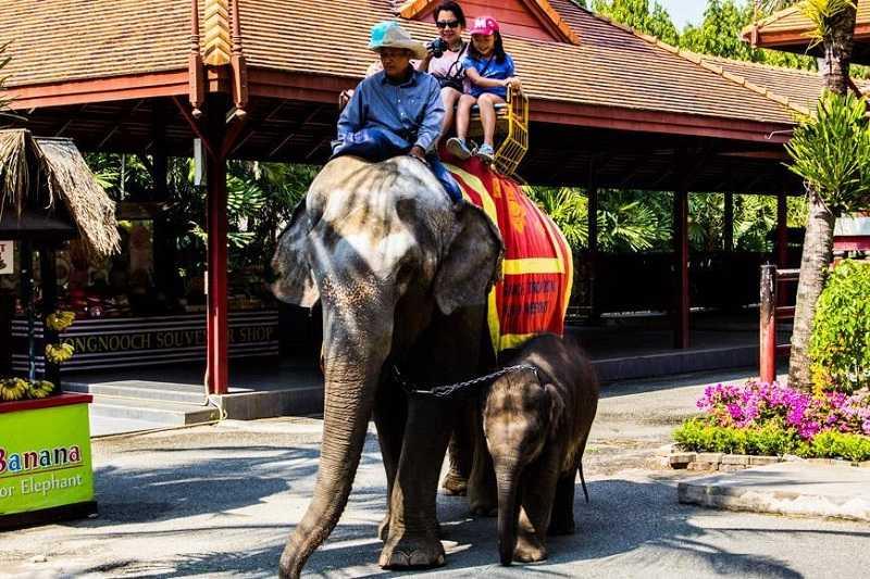 Парк Нонг Нуч в Паттайе Зоопарк