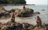 Паттайя Остров обезьян