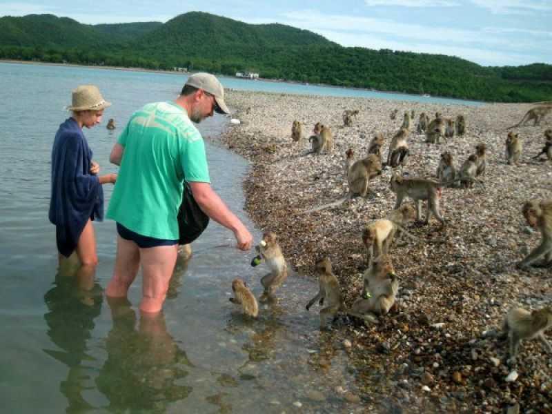 Паттайя Остров обезьян кормление животных